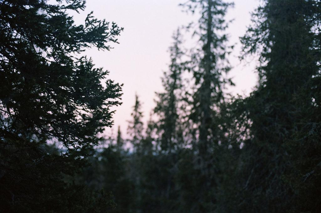 seid-06-blog.jpg