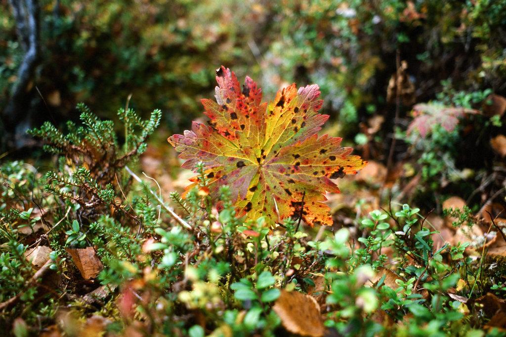 blog-kareia-fall-03.jpg