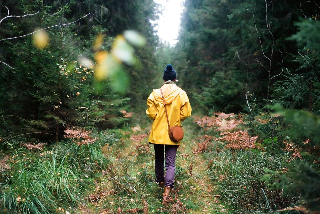 В лесах Карельского перешейка | Karelian isthmus