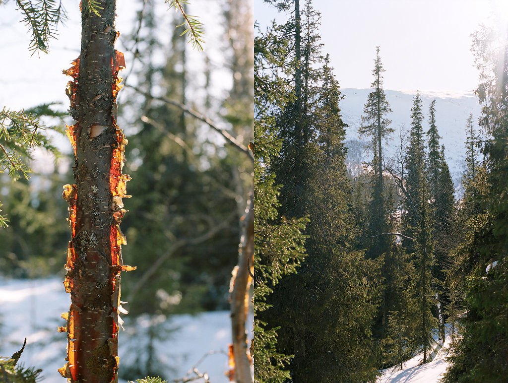seid-winter-site-01.jpg